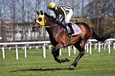 Jockey & horse flat racing