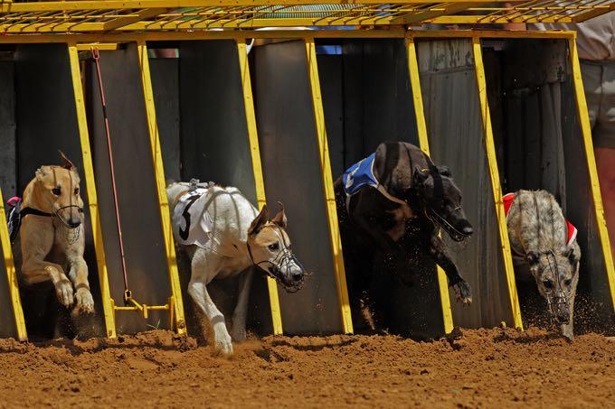 Greyhound starting line