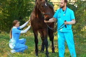 Sick Horse and Vet