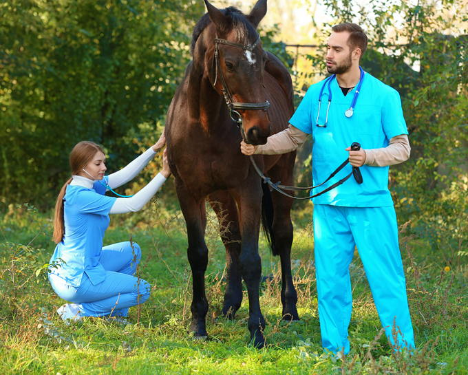 Sick Horse and Vet