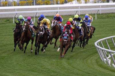 Horses racing around a bend